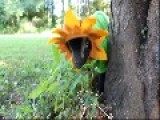 Baby Goat Dresses Up As A Spectacular Sunflower