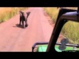 Baby Elephant Charges At Tourists Before Running Back Scared