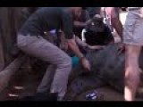 Baby Rhino Fights For Life As The Animal Is Given CPR