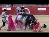 Bull Wins On Live TV - ** New ** July 9
