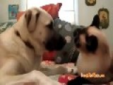 Boxing Cat Beats Up Dog For Touching Him