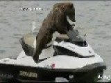 Bear Gets On A Jet Ski