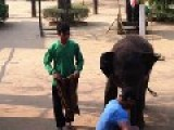 Baby Elephant Pounding On A Tourist's Balls