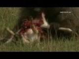 Baboons Live Prey On Deer