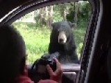 Bear Opens Door To Car