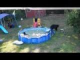 Bears Ruining Children's Backyard And Upset Dad In NJ