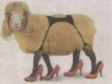 Baaad Boy, Fresno State Student Artesyed For Havin Sex With Sheep