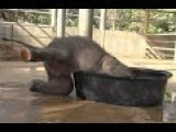 Baby Elephant Wants To Get In His Tub! But Will Mum Help