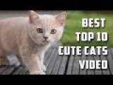 Best Top 10 Cute Cats Video Compilation