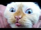 Best Funny Cats And Dogs Vines Compilation NEW