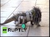 Brazil: Wheely Happy Hedgehog Saved By New Wheelchair