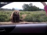 Bear Waves To Car Passenger - Lol
