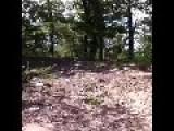Bravest Deer In The World!