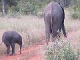 Baby Elephant Discovers His Second Trunk