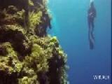 Bunaken - Breathtaking Underwater Life