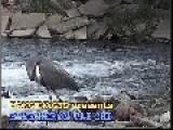 Blue Heron Tai Chi