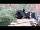 Bear Nibbles On Gun Muzzle