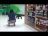 Bear Cub Roams Aisles At Local Shop