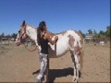 Brazilian Girl Shows You How To Mount Tall Horse With No Stepping Stone