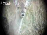 Bambi -- I'm Ready For My Close-Up!