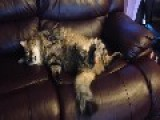 Cat Recovers After A Rough Day
