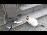 Cat Funny Compilation November 2015