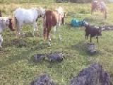 Camping Around Ponies
