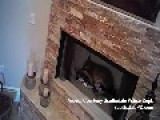 Coyote Breaks Into Home, Takes A Nap In Fireplace. 2:45 Runtime