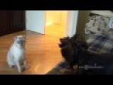Cat: Who Brought It Into My House? Кто принес это в мой дом?