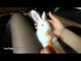 Cute Bunny Enjoying Carrot