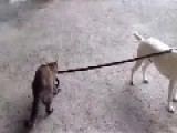 Cat Be The BOSS Of The Dog