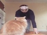 Cat Hits Owner Doing Yoga