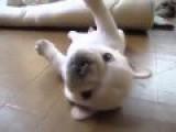 Cutie Dog Y