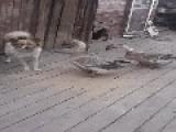 Crazy Goose Attacks A Dog - LOLDogs
