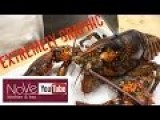Chopping Up A Live Lobster