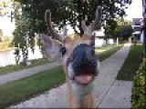 City Deer Don't Care