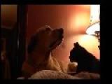 Cat Gives A Dog A Massage