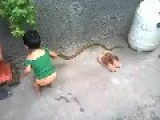 Child Playing With Snake