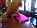 Compilation Of Cats Bullying People Proves Who Really Rules The House