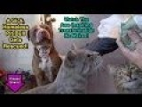 Cats Mooch Free Food During Pitbull Rescue