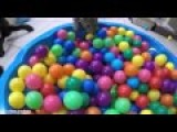 Cat In A Ball Pit