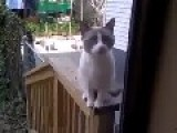 Cat Want Back So It Talk