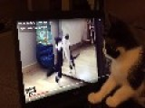 Confused Kitten Watches Video Of Herself