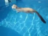 Cat Has A Swim In The Pool