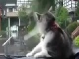 Cat Vs Windshield