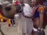 Camel Truly Sucks At A Street Performance In India