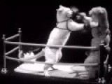 Cat Fight 1937