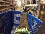 Capybara Rides In The Shopping Cart At The Pet Store