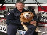 Canadian Dog That Searched For Survivors Of Hurricane Katrina Aug 29 2005 Dies 2014