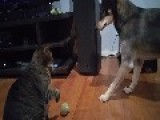 Cat Shows Canine Companion Who's Boss